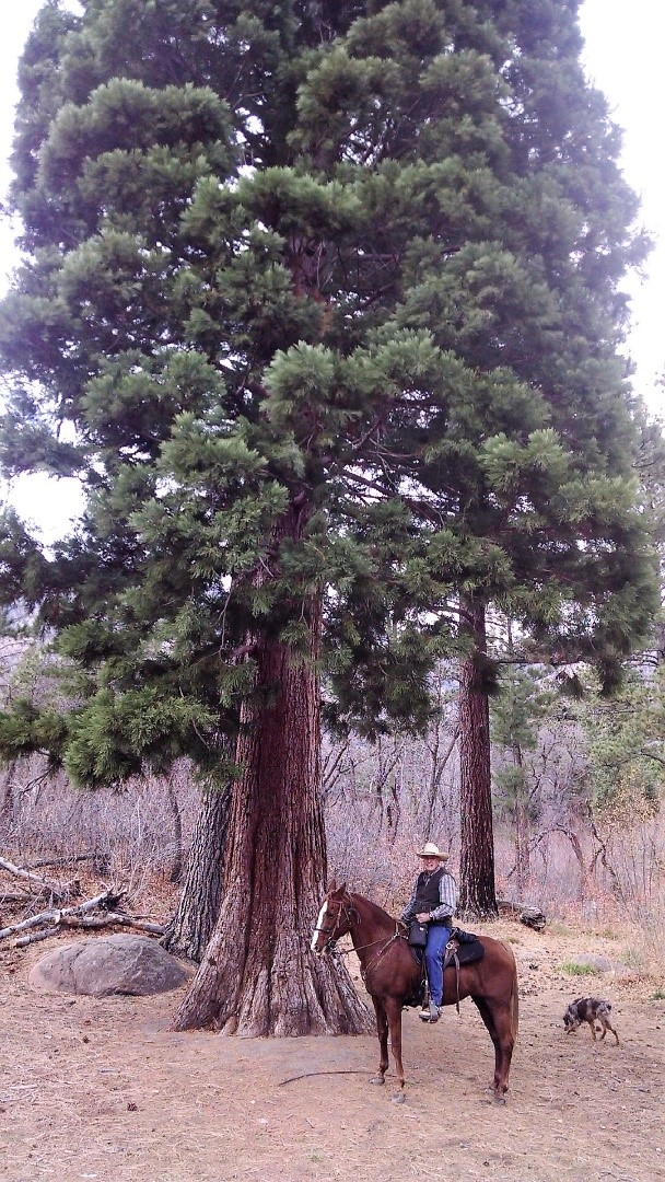 Doug West with the Giant Sequoia Tree